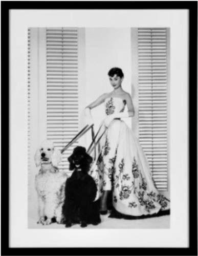 Bild Fame Audrey mit Hunden